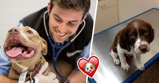 10 cosas que un veterinario NUNCA te dira