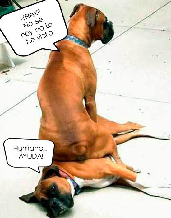 perro sentado sobre perro