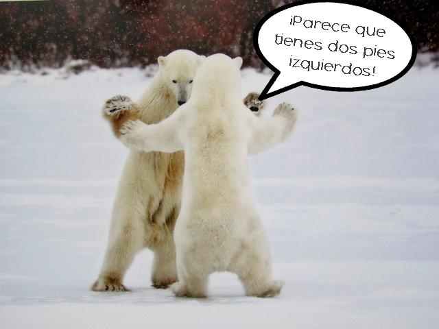 osos bailando