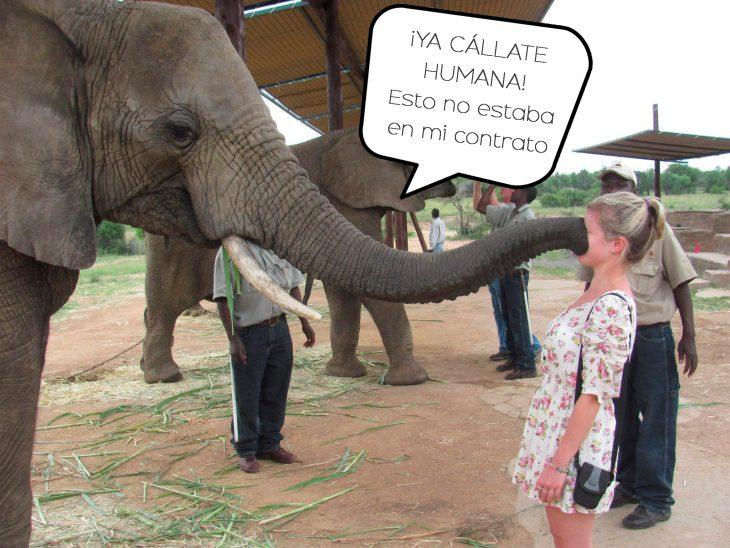 elefante con trompa en cara de mujer