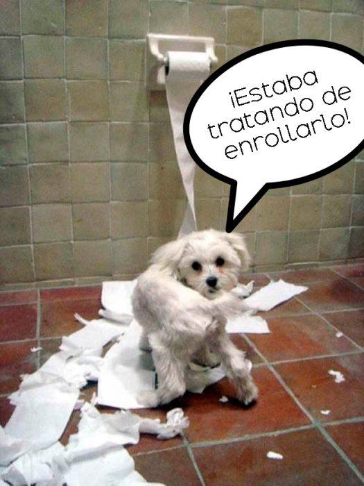 perro destrozando el papel de baño