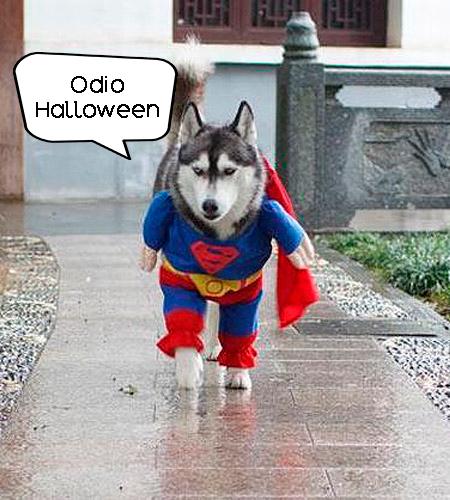 husky superman