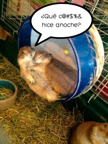 hamsters dormidos