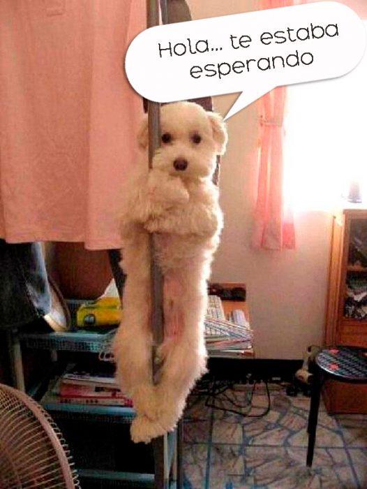 perro en tubo