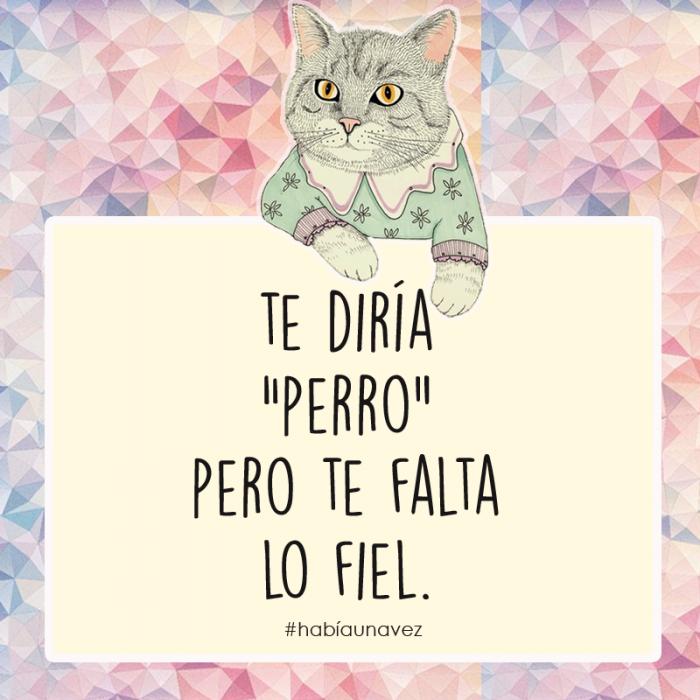 Cosas que los gatos siempre te han querido decir