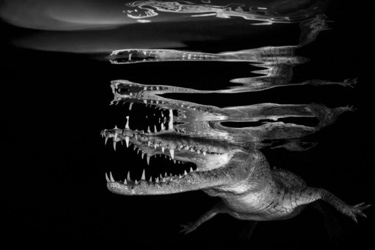 pez con dientes filosos