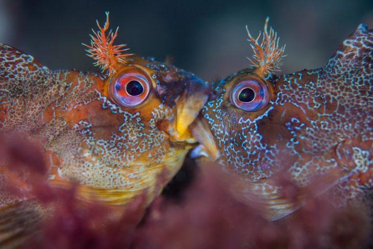 ojos morados bajo el mar