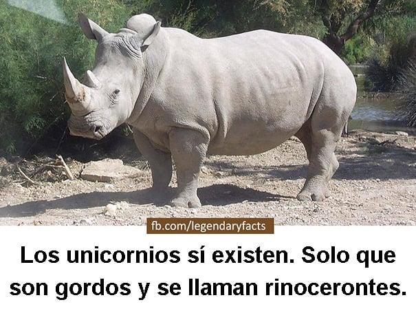 unicornios rinocerontes