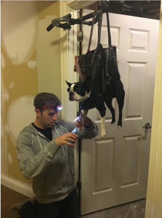 Inventó manera de cortar uñas a su perro