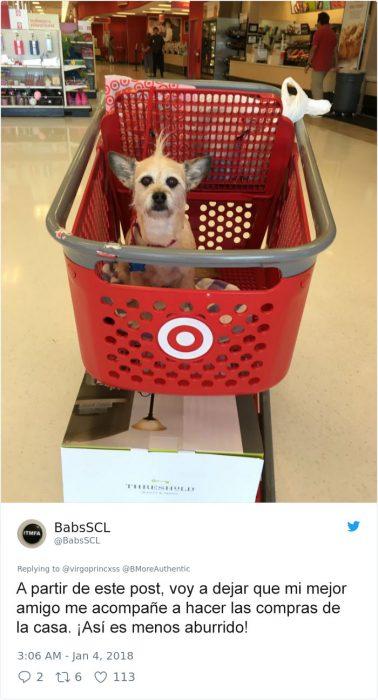 este perrito se fue al mercado
