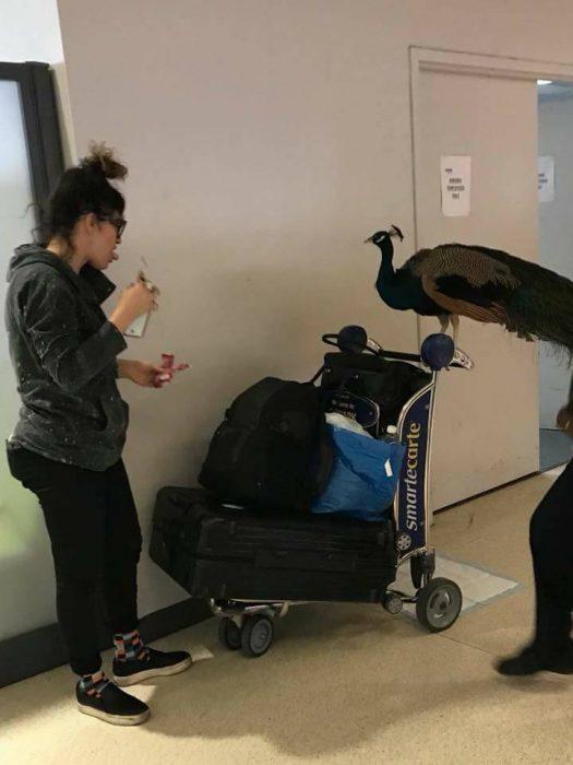 Mujer y su mascota pavo real