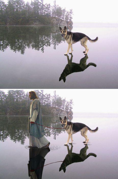 perro agua