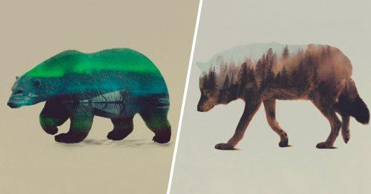 Cover retratos de animales en doble exposición