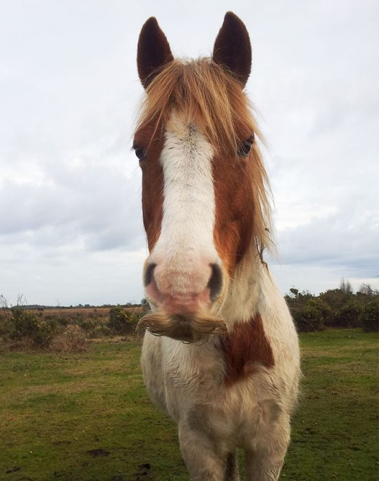 bigote caballo