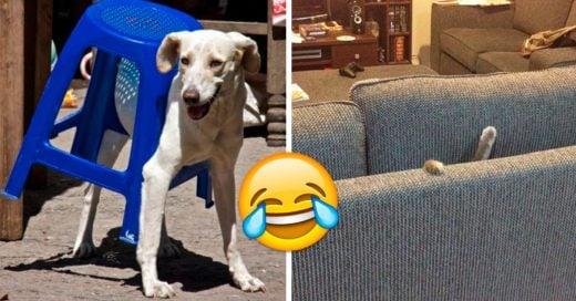 Cover muebles que lograron vencer a tus mascotas