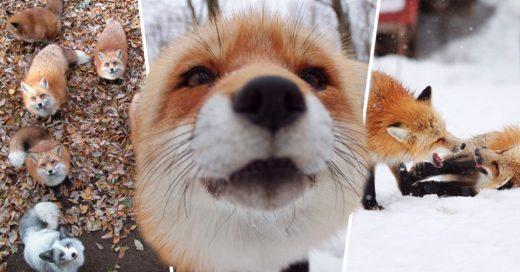 Cover Esta villa de zorros en Japón es el lugar más esponjoso y tierno del planeta