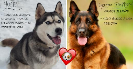 graciosa guia perruna te dira que tipo de perro es ideal para ti
