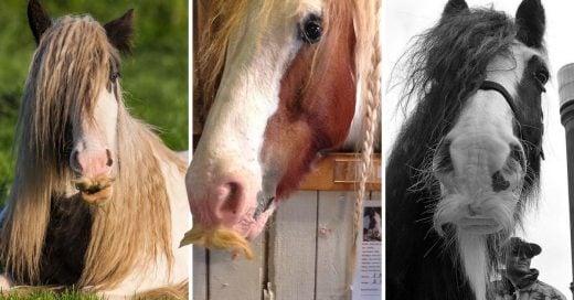 Cover caballos con bigote que te harán desear tener mostacho