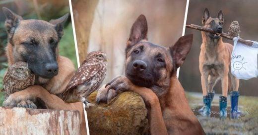 Cover El mejor amigo de este perro no es un hombre, sino una ave