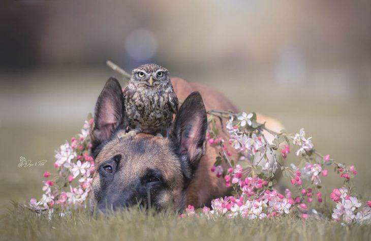Amigos perro y buhó