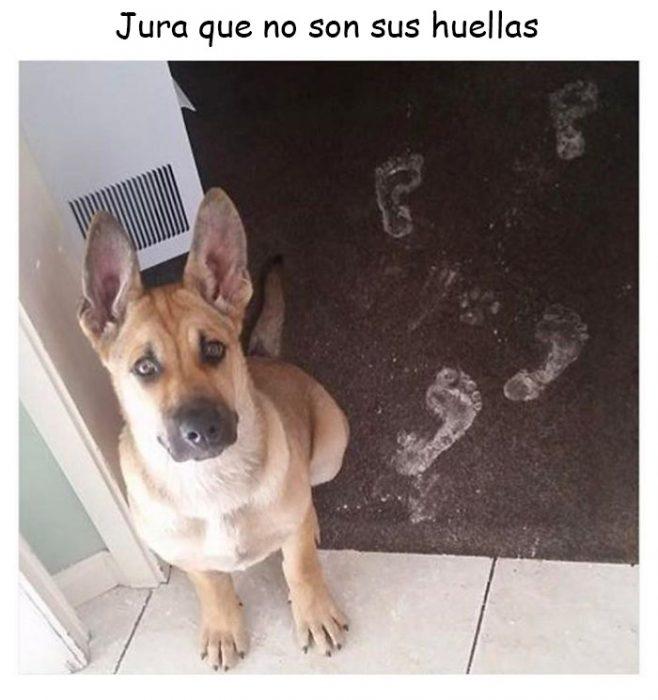 memes de perros
