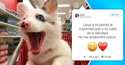 Cover Este perrito acompañó a su amo al supermercado y fue el más feliz