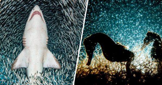 Cover otos bajo el agua que muestran que el mundo acuático es maravilloso
