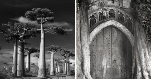 Cover Los árboles mas antiguos del mundo