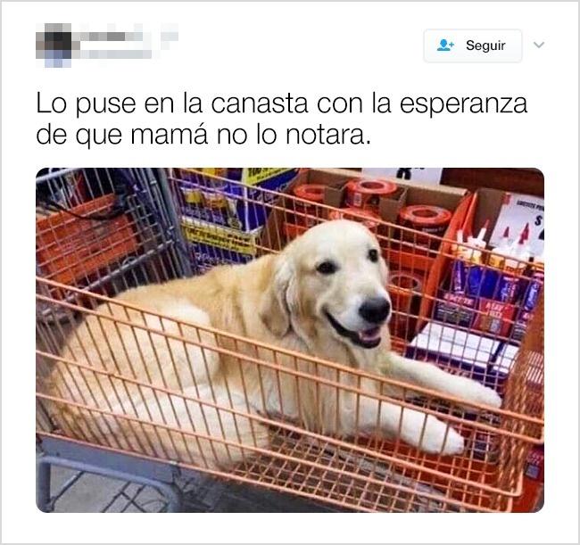 tuits graciosos de animales