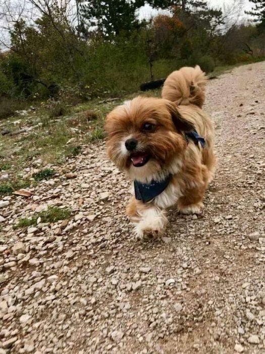perrito paseando