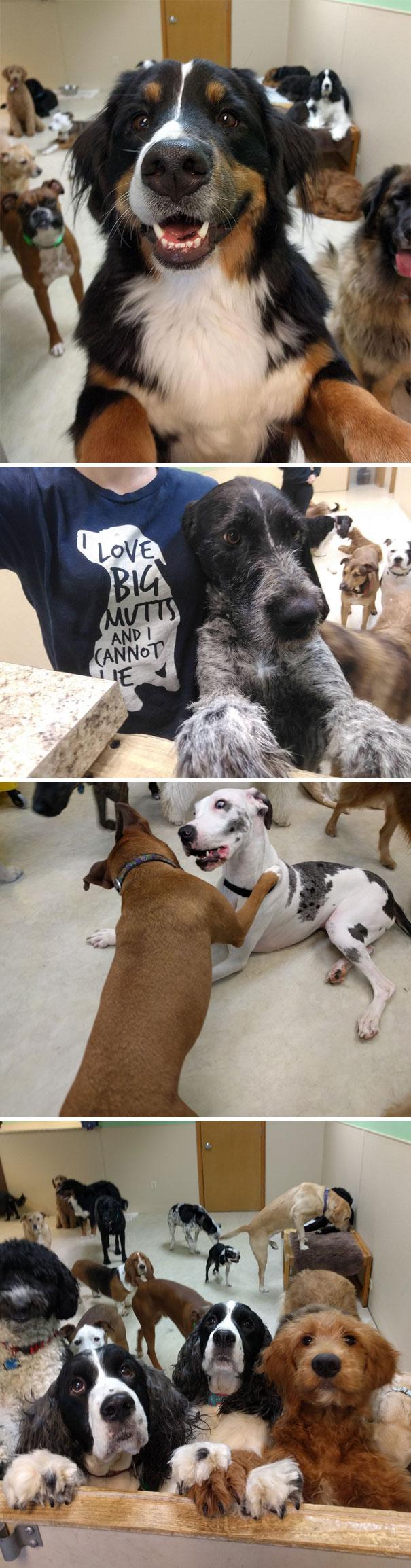Animales refugio