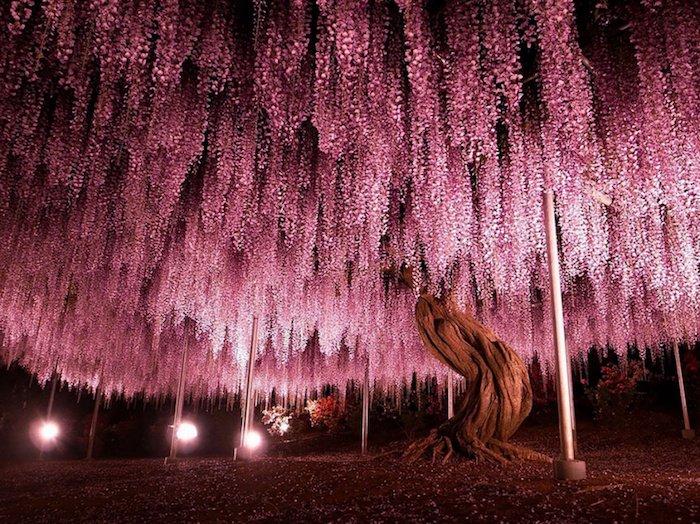 arbol japones