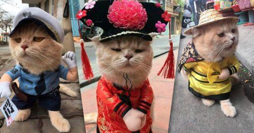 Cover gato vietnamita es el vendedor de pescado