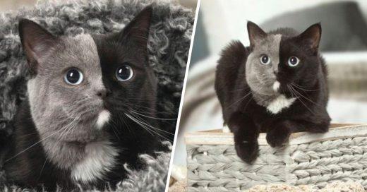 Cover Esta gatita nació con una extraña condición que la hace tener dos caras