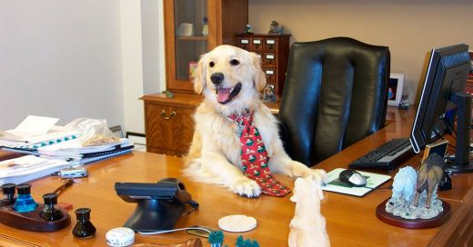 Cover razones de porqué llevar tu perro al trabajo es lo mejor