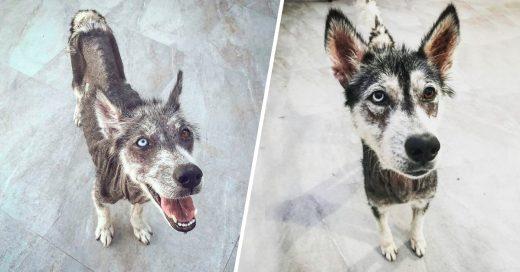 Cover Este perrito fue rescatado y su transformación fue de patito feo a cisne