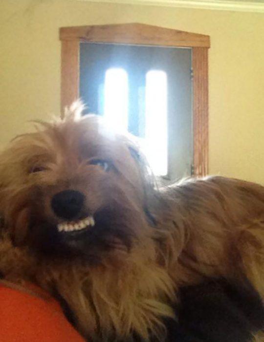 sonrisaperro