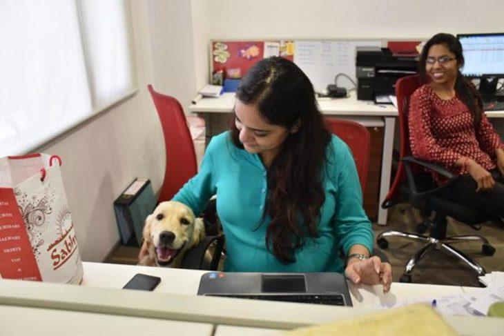 perro oficina