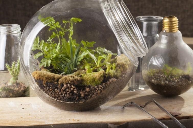 Haz un terrario es f cil y no necesitas mucho te for Definicion de vivero