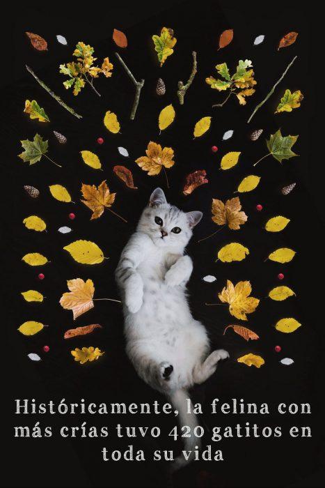 Datos curiosos sobre los gatos que no conocías