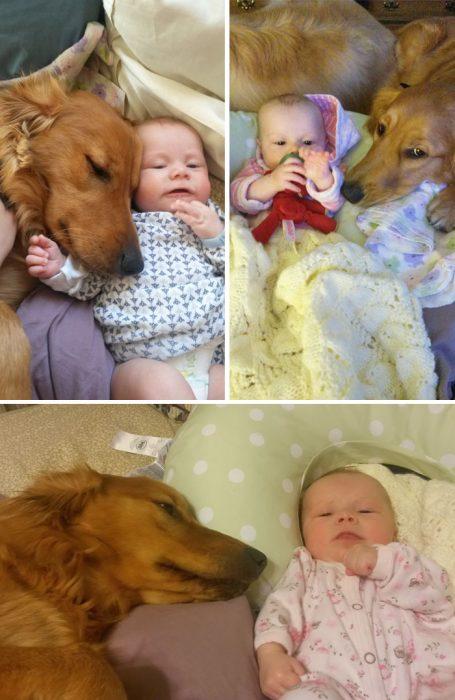 perrito con bebé