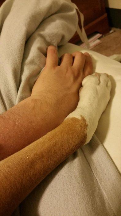 mano y patita de perro