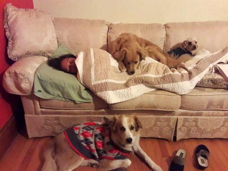 señora en el sofá con perritos