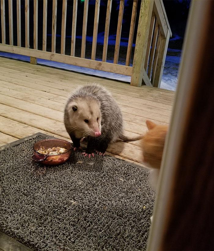se comió mi comida