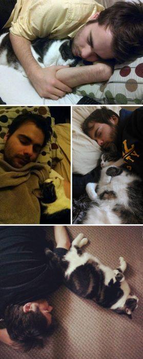 varias fotos de gato y hombre dormidos juntos