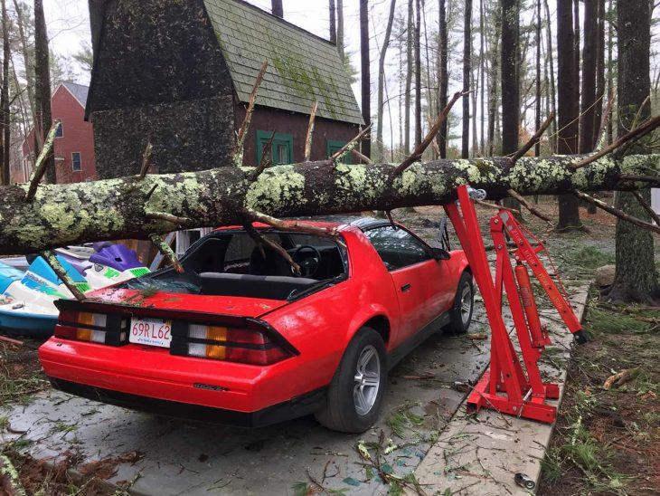 árbol auto