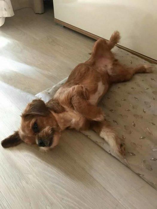 Increíble transformación de perrito callejero Recreo Viral