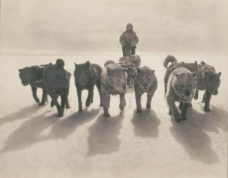 Perros tirando de trineo en la primera expedición Antártica Australiana