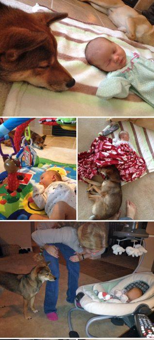perrito cuidando a bebé