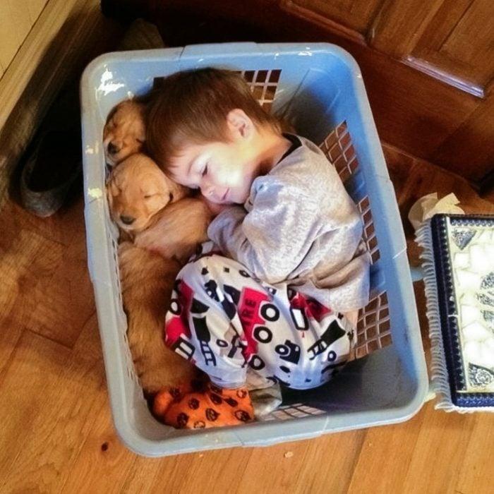 niño dormido con cachorros
